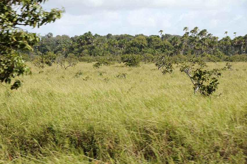 Savanes sèches guyanaises
